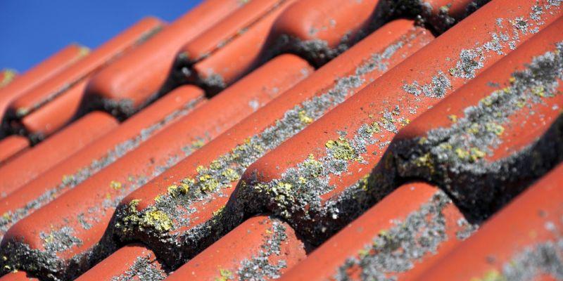 la mousse sur le toit est un problème que vous devez traiter rapidement